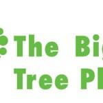The Big Tree Plant